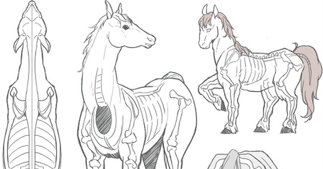 骨格ポージング装飾も馬の描き方講座 10選 Pixivision