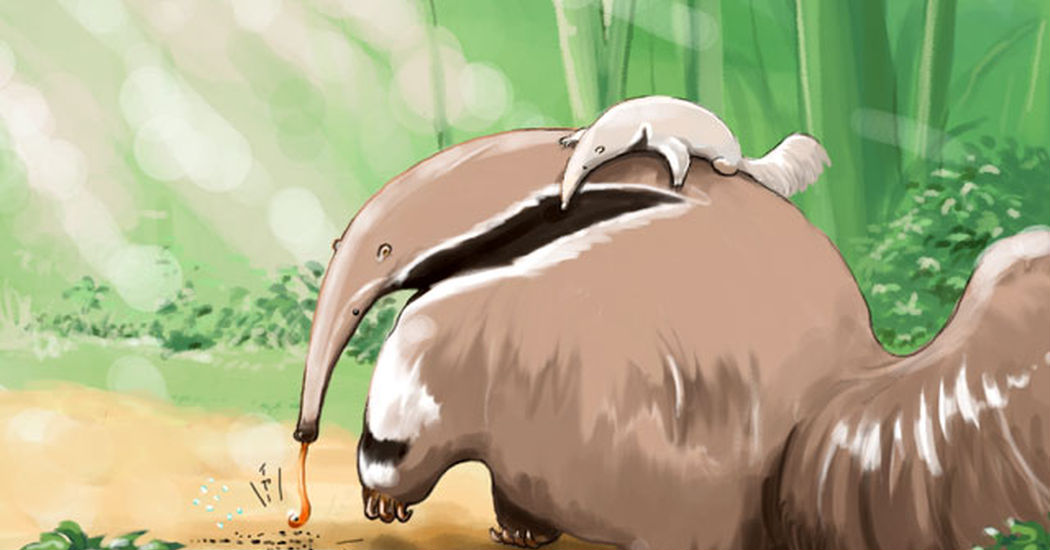 Anteaters!!!!