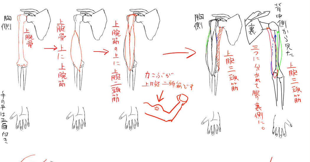 Learn How to Draw the Areas in the Upper Body