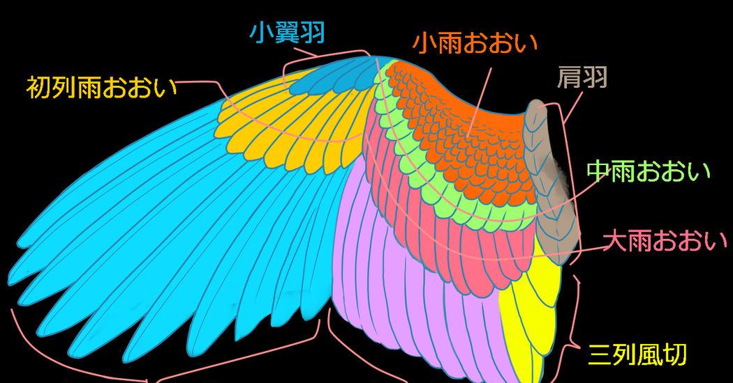 翼の描き方10選翼の構造羽の描き方 講座 Pixivision
