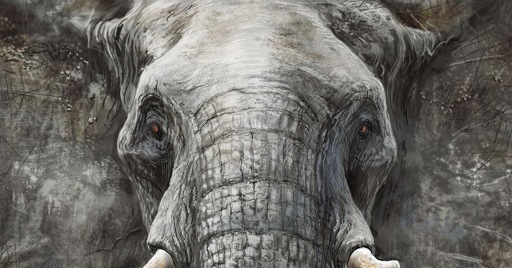 Largest Land Mammal, Elephants!