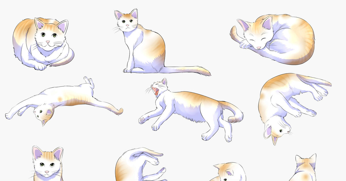 How to Draw: Cats!