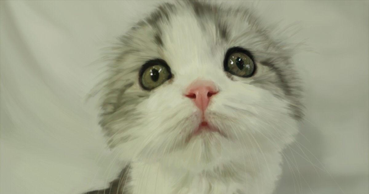 Cats! Cats! Cats!