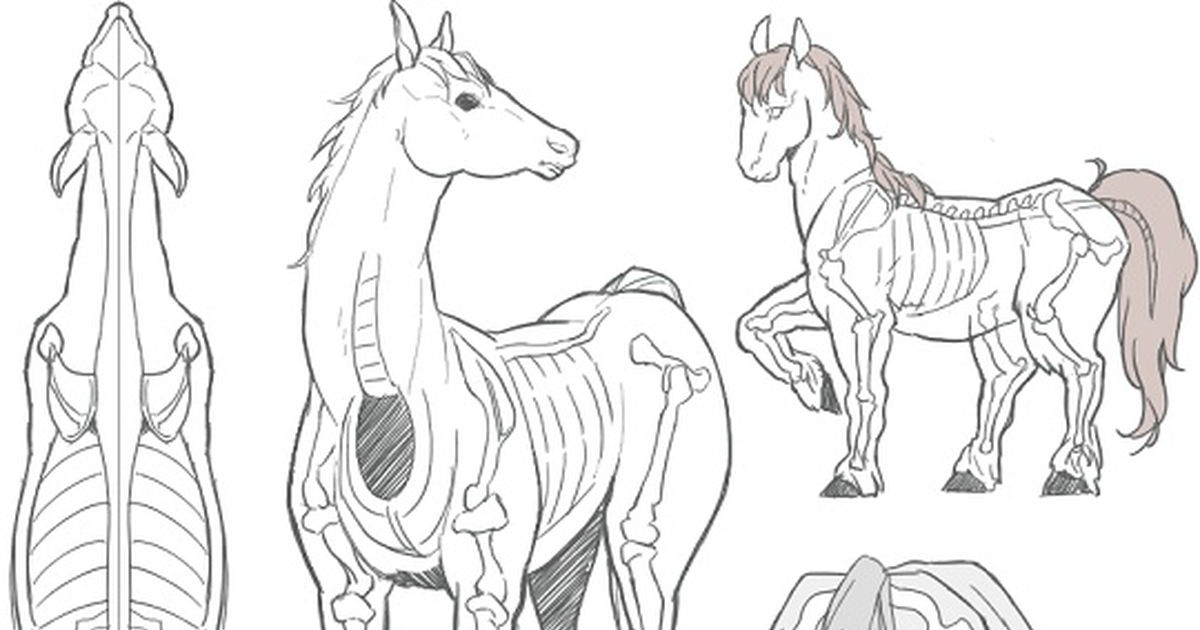 How to Draw: 10 Ways To Draw Horses!