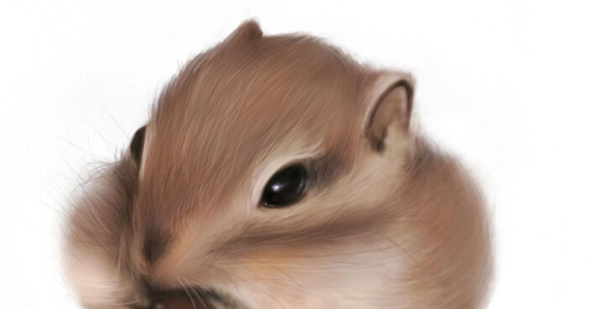 Round Eyes, Fluffy Tail: Squirrels!