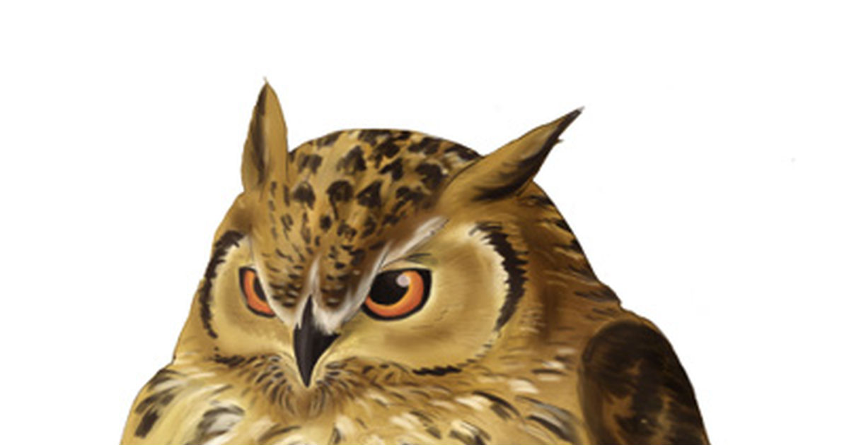 Owl Spotlight!!