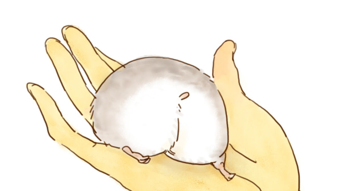 Adorable hamster butts!