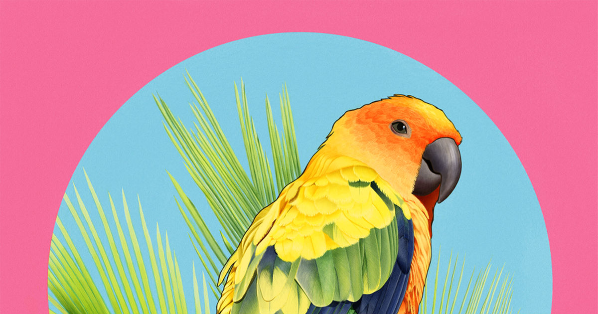 Parakeet Collection (2nd Edition)