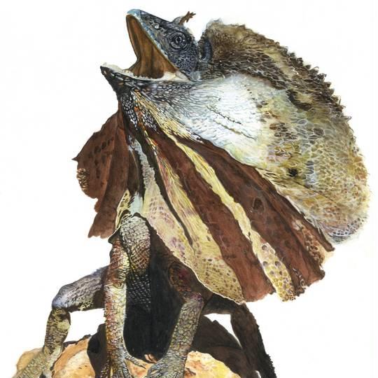 エリマキトカゲ えりまきとかげとはピクシブ百科事典