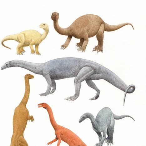 古竜脚類 (こりゅうきゃくるい)とは【ピクシブ百科事典】